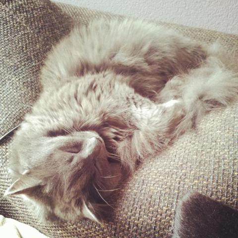 Fuzzy: Is 'ie pluizig of niet?